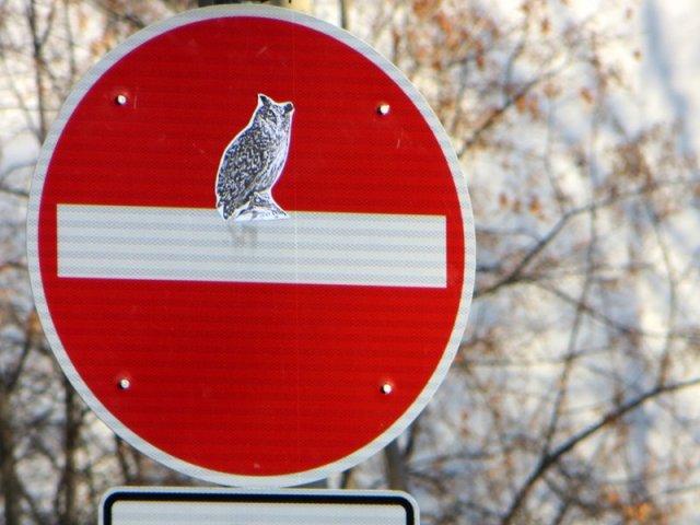 Sticker - Eule auf Durchfahrt-verboten-Schild in Dresden