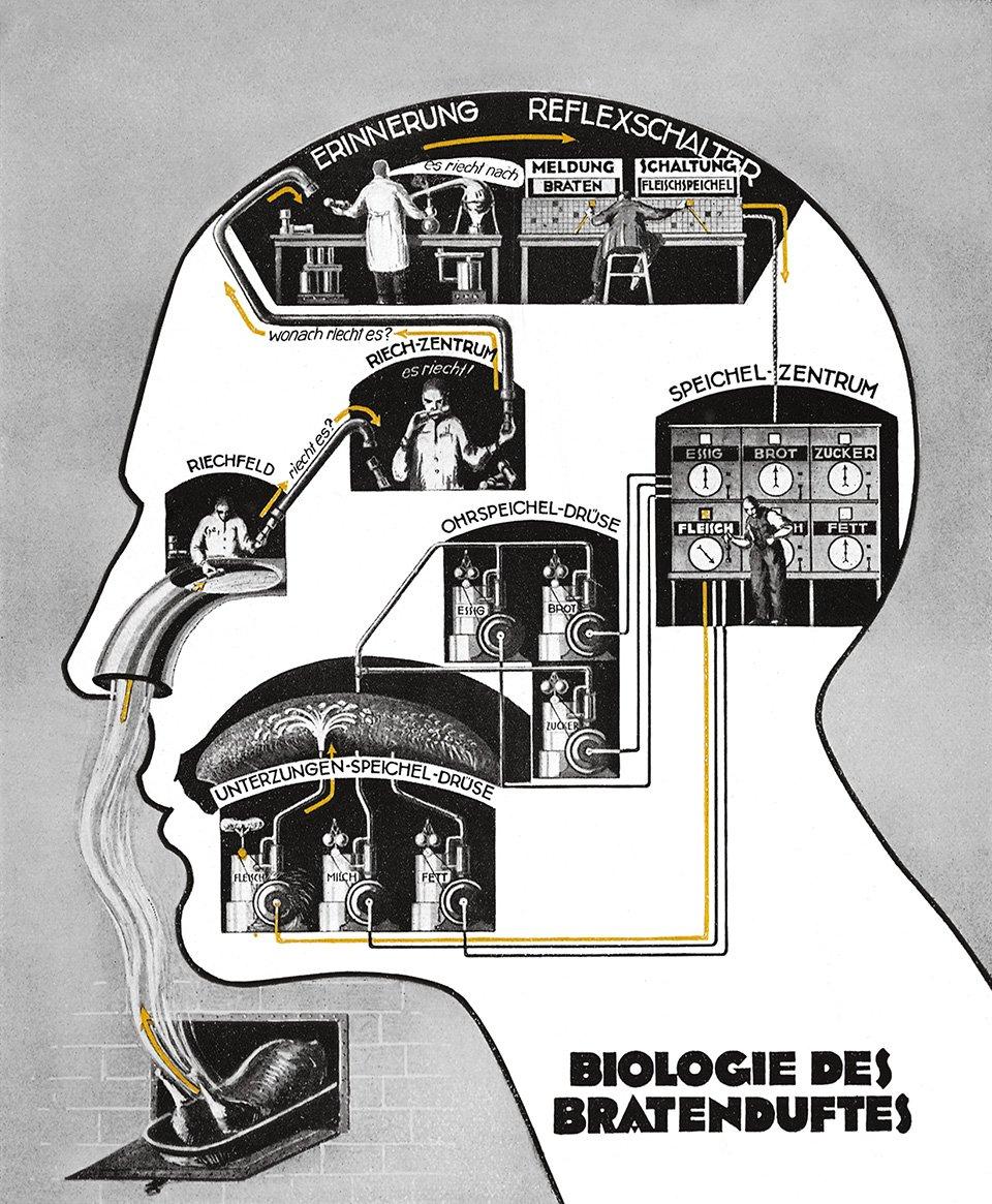Biologie des Bratenduftes (The biology of smelling a roast) Das Leben des Menschen III, Franckh/Kosmos, Stuttgart 1926, pl. XV